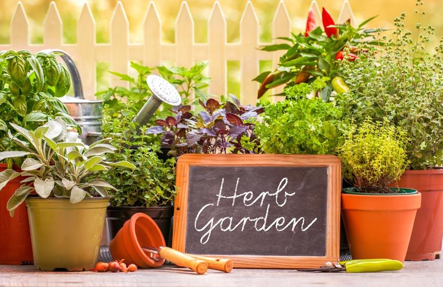 Banner_garden.jpg